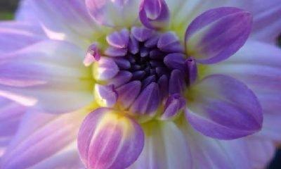 Çiçeklerin yüksek benlik temasları