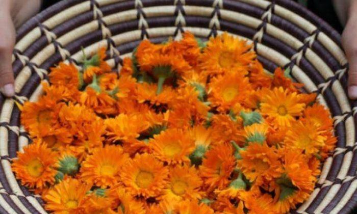 Çakralarla çalışırken çiçeklerin etkisi