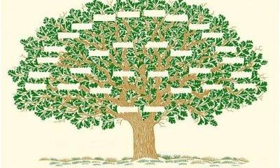 Soy ağacı artık E-Devlet'ten çıkarılabiliyor