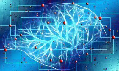 Herkes için beyin eğitimi