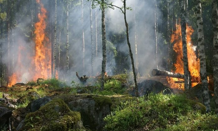 Pandemi, yangınlar ve turizm sektörü